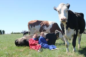koeien knuffelen spanbroek