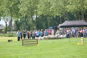 boerderij schapen drijven