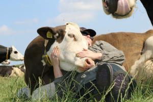 farmsurvival koe-knuffelen