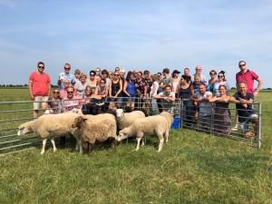 farmsurvival schapen drijven